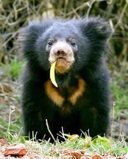 ouranimals bears